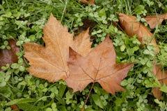 Пары листьев Стоковые Фотографии RF