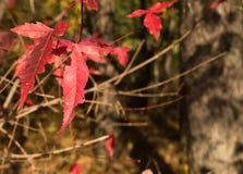 Пары листьев Стоковая Фотография RF