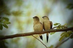 пары карточки птиц обрамляют сбор винограда Валентайн приглашения s Стоковое Изображение RF