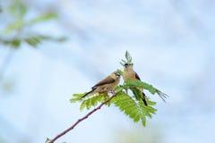 пары карточки птиц обрамляют сбор винограда Валентайн приглашения s Стоковые Фотографии RF