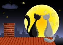 Пары котов Стоковое Изображение