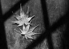 Пары кленового листа Стоковая Фотография