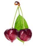 пары листьев зеленого цвета плодоовощ вишни красные намочили Стоковое Изображение RF