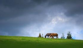 Пары лошадей пася в горах на предпосылке бурного темного неба стоковые фотографии rf