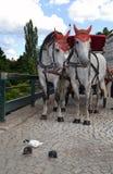 Пары лошадей Стоковые Изображения