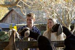 Пары на Petting зоопарке Стоковое Изображение