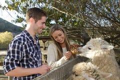 Пары на Petting зоопарке Стоковая Фотография RF
