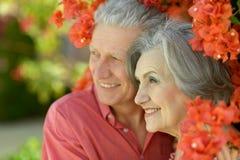 пары обнимая старший Стоковые Изображения