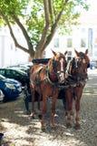 Пары лошадей в проводке на улице города Стоковое фото RF