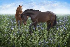Пары лошадей в луге среди цветков стоковые изображения