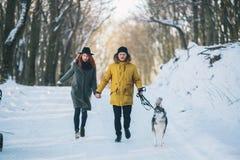 Пары при собака идя в парк Стоковые Изображения