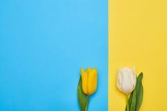 Пары 2 различных изолированных тюльпанов весны Стоковые Изображения RF