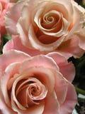 пары романтичные Стоковые Фотографии RF