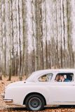 Пары свадьбы сидя в винтажном автомобиле солнечний свет дуба пущи конструкции граници предпосылки осени жолудей Стоковое Фото