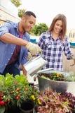 Пары смешанной гонки засаживая сад крыши совместно Стоковое Фото