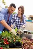 Пары смешанной гонки засаживая сад крыши совместно Стоковая Фотография
