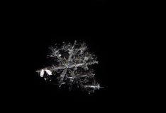 Пары снежинки закрывают вверх изолированный на черноте Стоковая Фотография RF