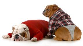 Пары собаки Стоковые Изображения RF