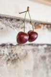 Пары сладостных вишен на старой бетонной стене Стоковая Фотография RF