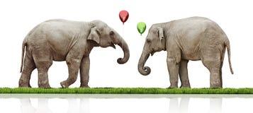 Пары слонов