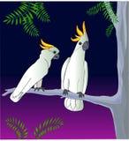 Пары тропического леса ib попугаев какаду тропического Стоковое Фото