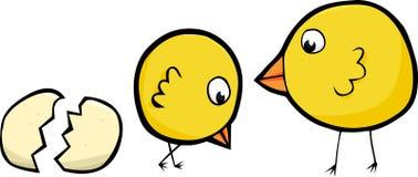 пары цыпленоков Стоковое Изображение