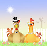 Пары цыплят Стоковые Изображения RF