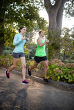 Пары Jogging в парке Стоковое Изображение