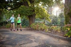 Пары Jogging в парке Стоковое фото RF
