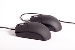 Пары Mouses Стоковая Фотография RF
