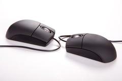 Пары Mouses Стоковое фото RF
