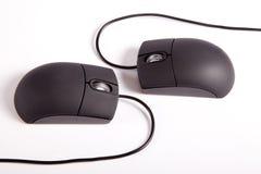 Пары Mouses Стоковые Фото