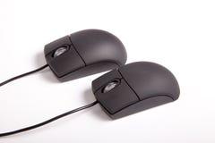 Пары Mouses Стоковое Фото