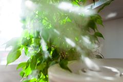 Пар от увлажнителя в свете солнца стоковое изображение rf