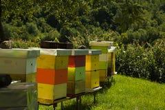 Пасека монастыря с много пчелами стоковая фотография rf