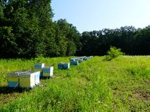 Пасека с пчелами в glade леса стоковое изображение