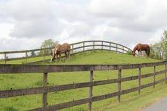 пасите лошадей горного склона стоковая фотография