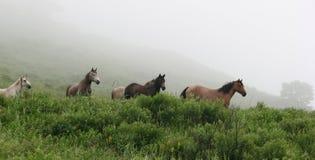 пасите лужок лошадей стоковое изображение rf