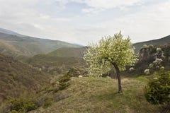 пасмурная весна дня стоковые фотографии rf