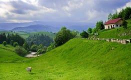 пасмурная долина неба ландшафта зеленого цвета коровы Стоковая Фотография