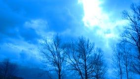 пасмурная пуща Стоковые Фотографии RF