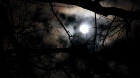 Пасмурная луна за деревьями на ветреной ноче сток-видео