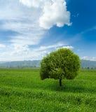 пасмурное лето неба ландшафта Стоковое Изображение