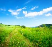 пасмурное небо травы Стоковое Изображение RF