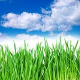 пасмурное небо травы Стоковое Изображение