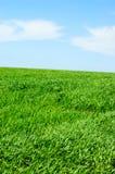 пасмурное небо травы Стоковые Изображения RF