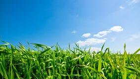 пасмурное небо травы Стоковые Изображения