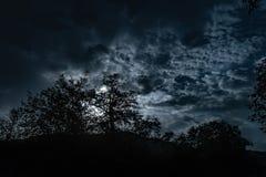 Пасмурное ночное небо с светом луны в загадочном лесе Стоковое фото RF