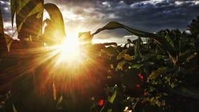 Пасмурный восход солнца в маленьком городе Стоковое Фото