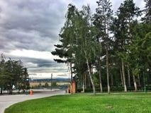 пасмурный день среди деревьев стоковое фото